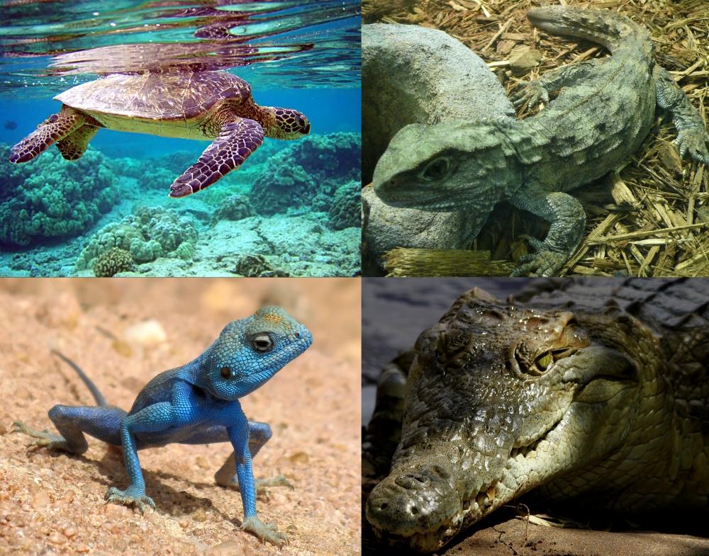 extant_reptilia